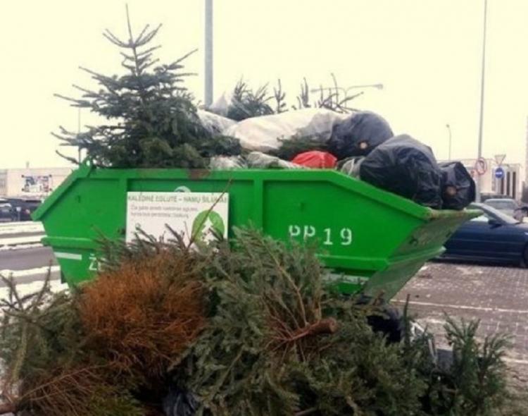Kalėdų eglutės bus tinkamai sutvarkytos